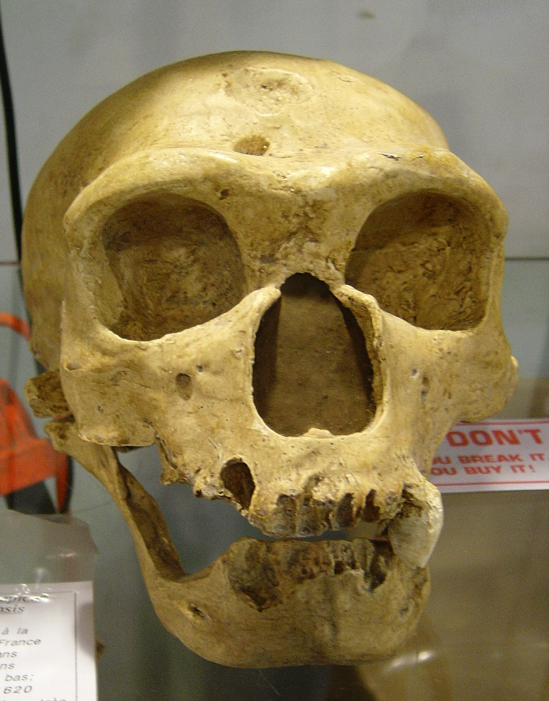 foto homo sapien sapiens