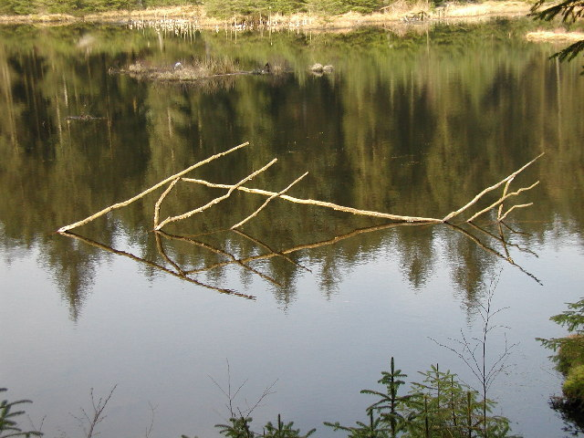 """Only one Fish Left"" - Grizedale Forest - geograph.org.uk - 36885"