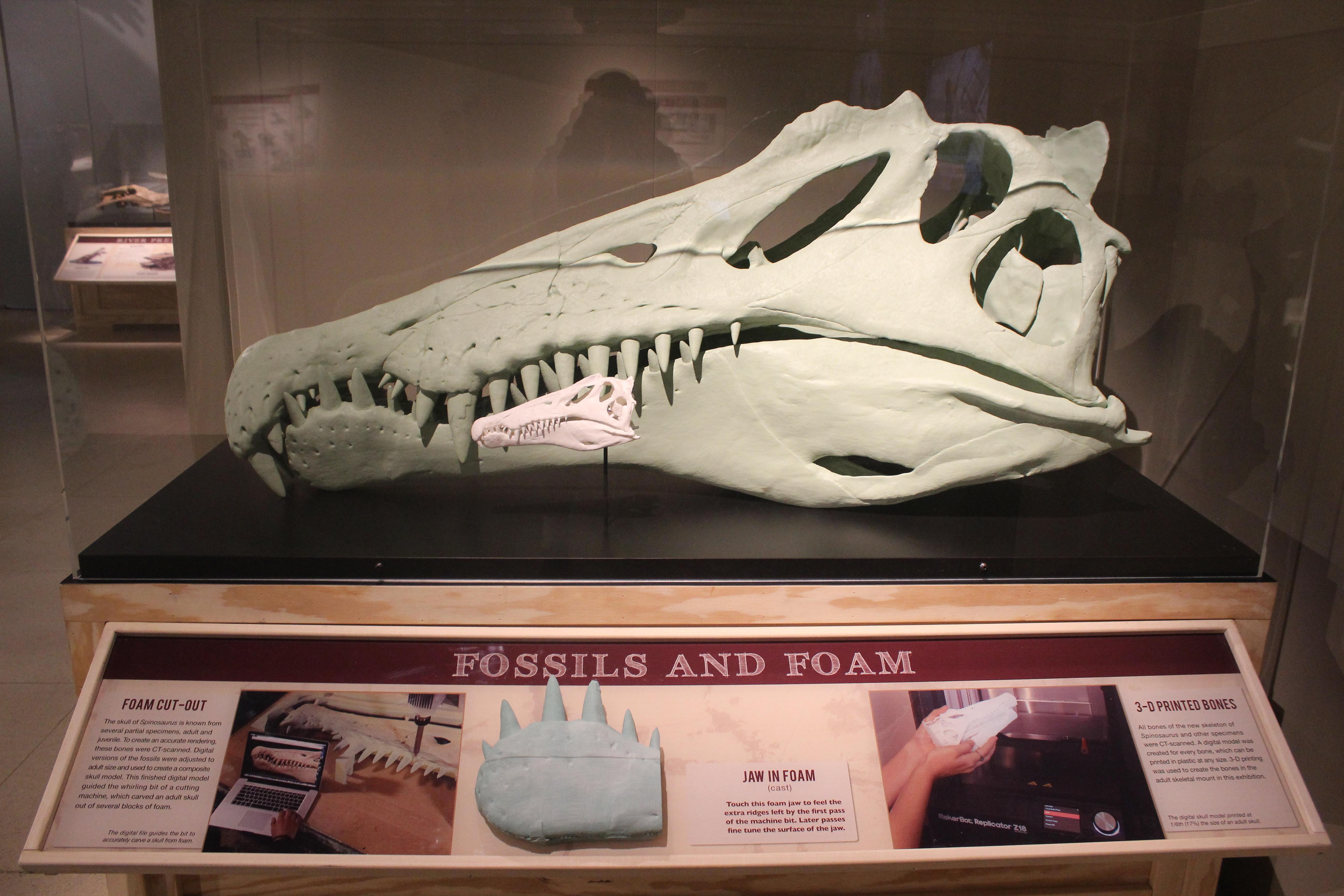 3D printed spinosaurus skull