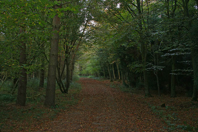 A walk through Twyford Wood, No 8 - geograph.org.uk - 272102