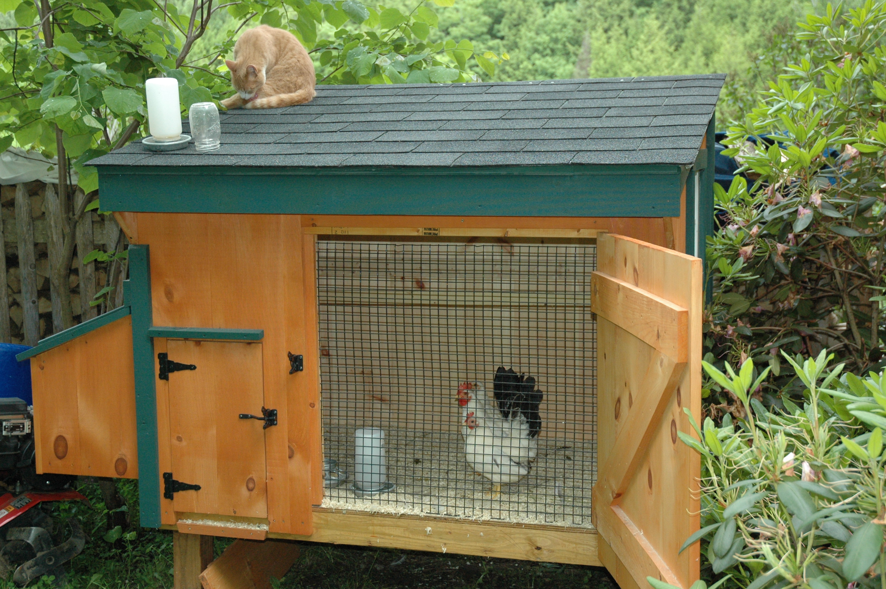 Description Bantams in chicken coop.jpg