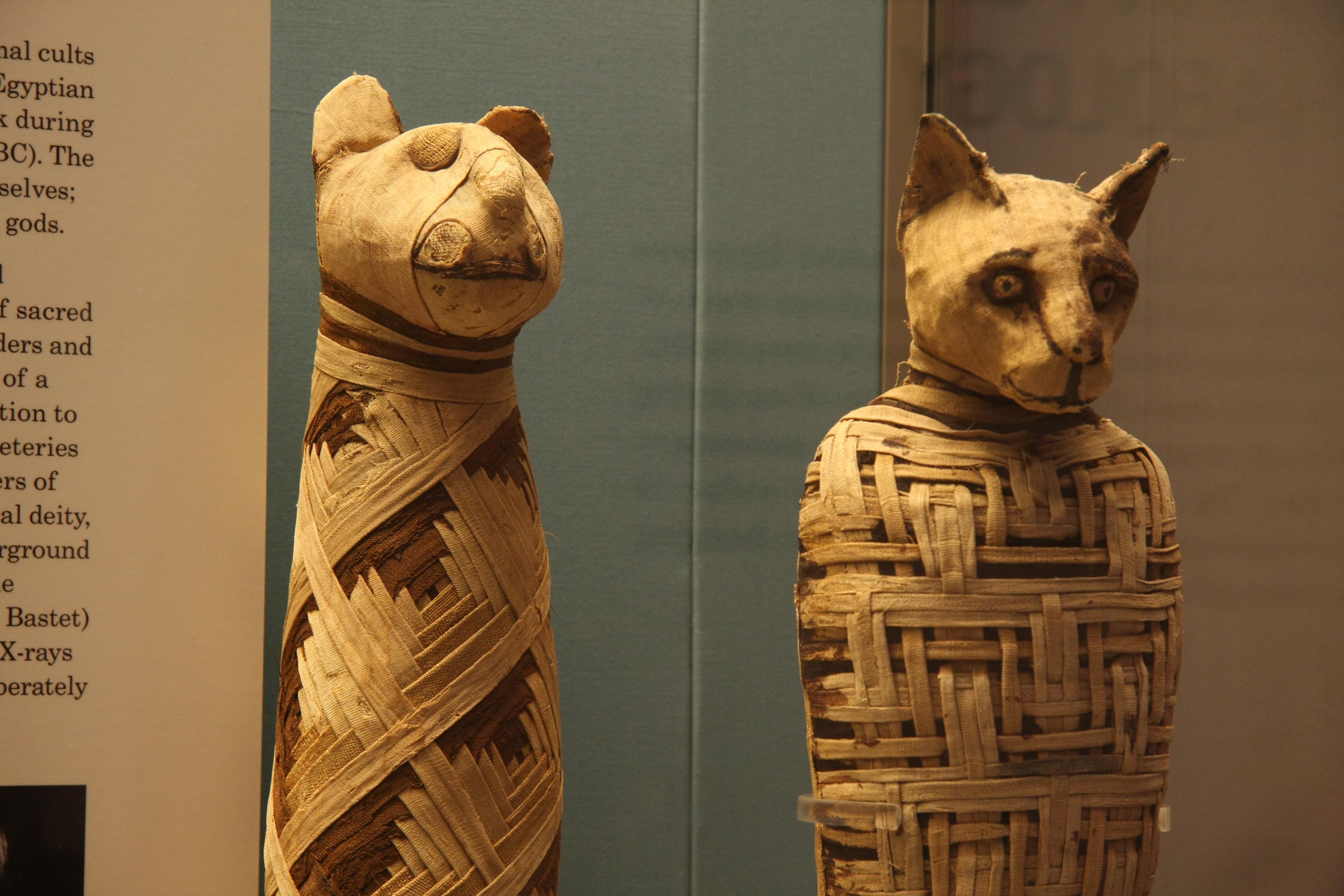 British museum, Egypt mummies of animals (4423733728).jpg