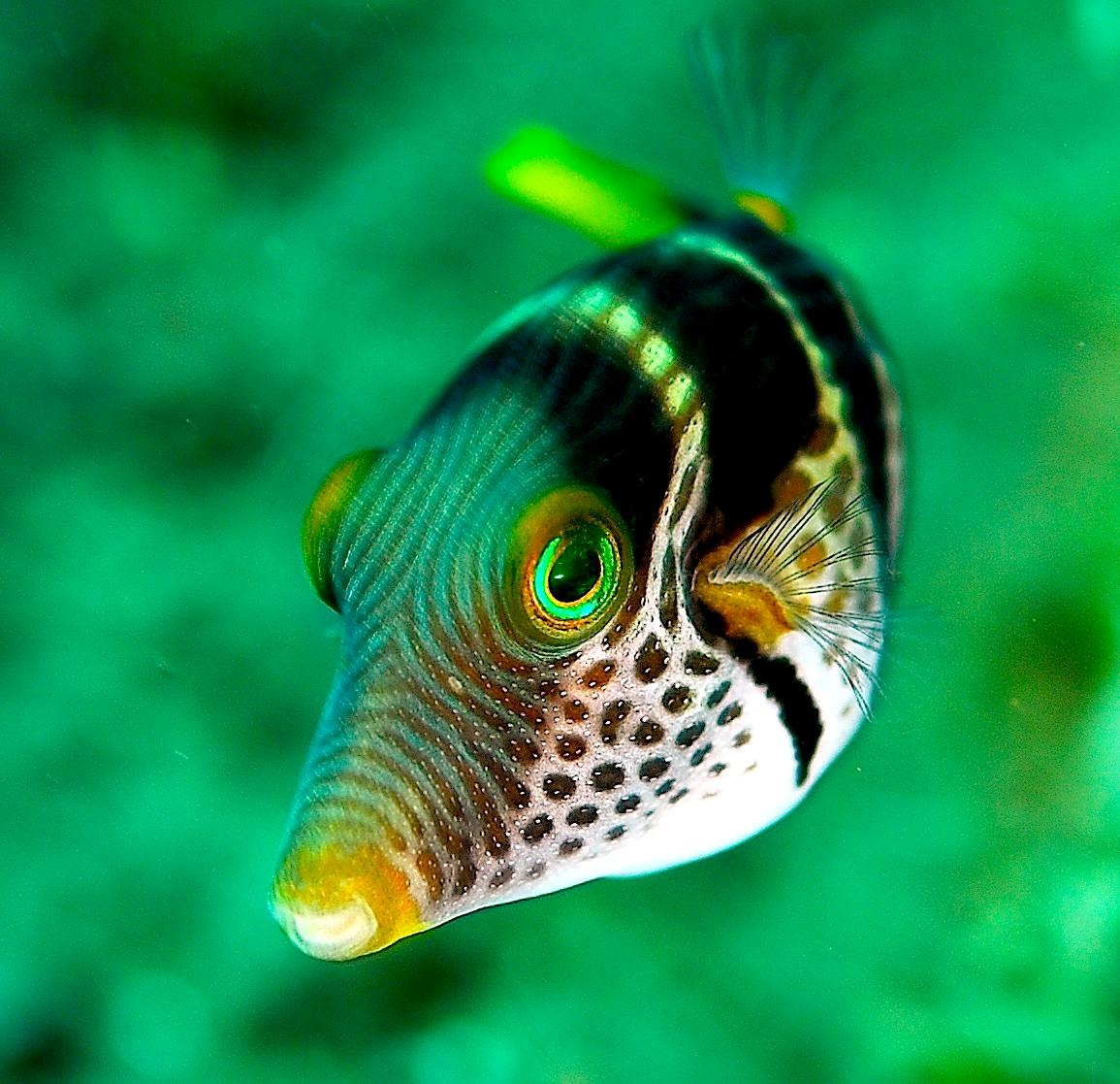 Image Result For Aquariums For Sale