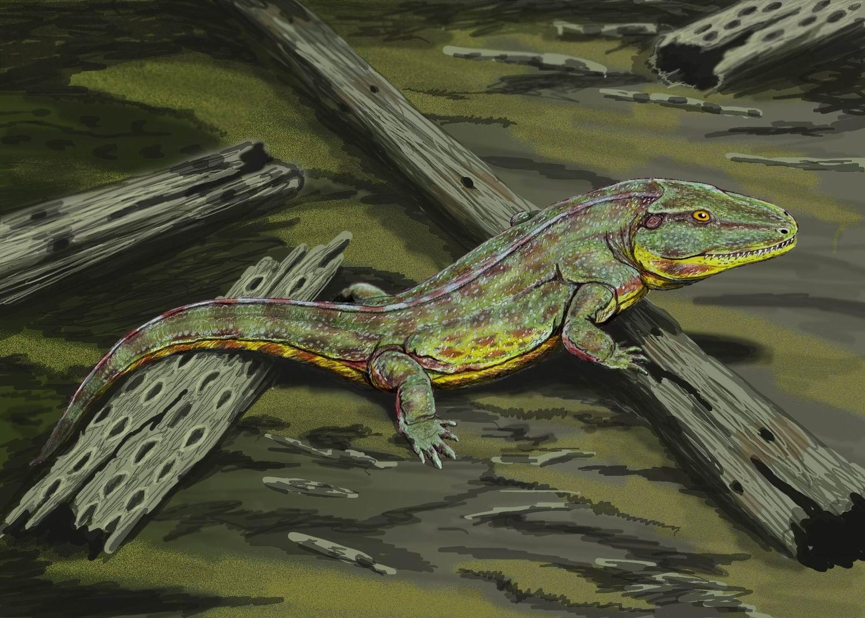 capetus amphibian wikipedia