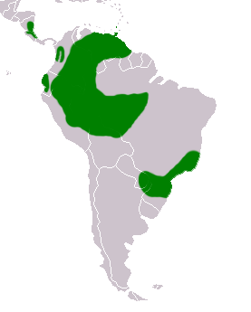 Chaetura cinereiventris map.png