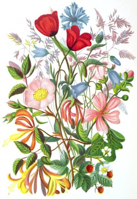 Image Result For Flowers Color By