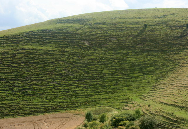 East side of Cley Hill - geograph.org.uk - 941973