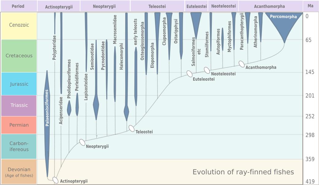 Carbon dating human bones diagram 2
