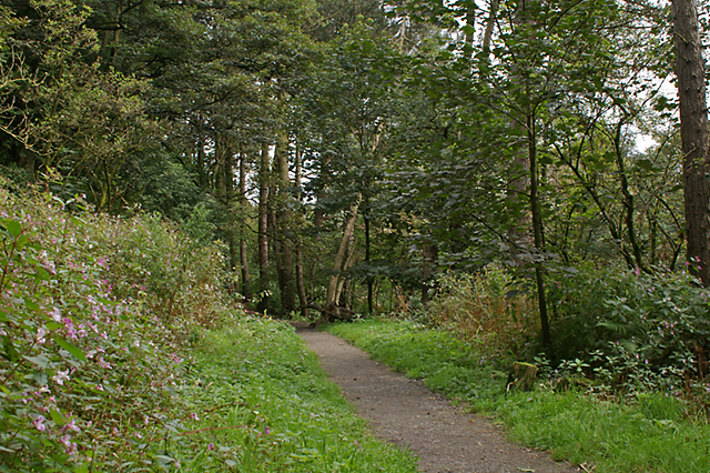Footpath in Sunnyhurst Wood - geograph.org.uk - 553540