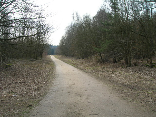 Forest track - geograph.org.uk - 1761709