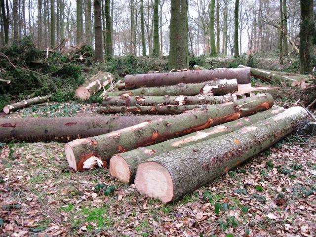 Green wood creates poor quality firewood