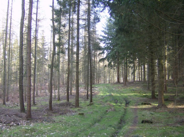 In Highclere Wood - geograph.org.uk - 360260