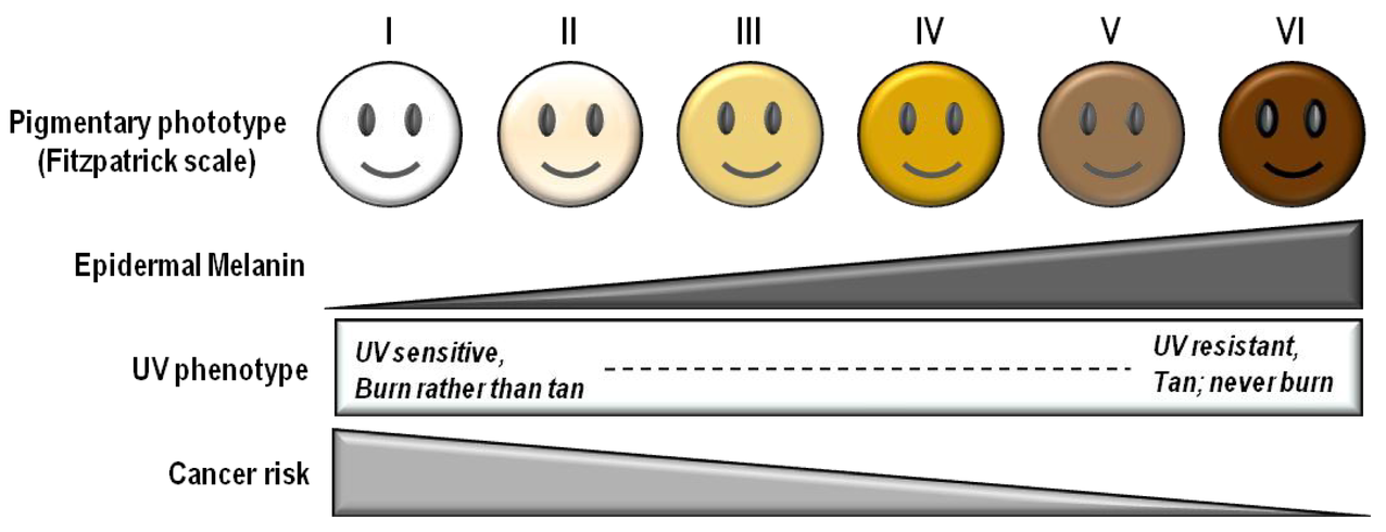 Fitzpatrick scale - Wikipedia