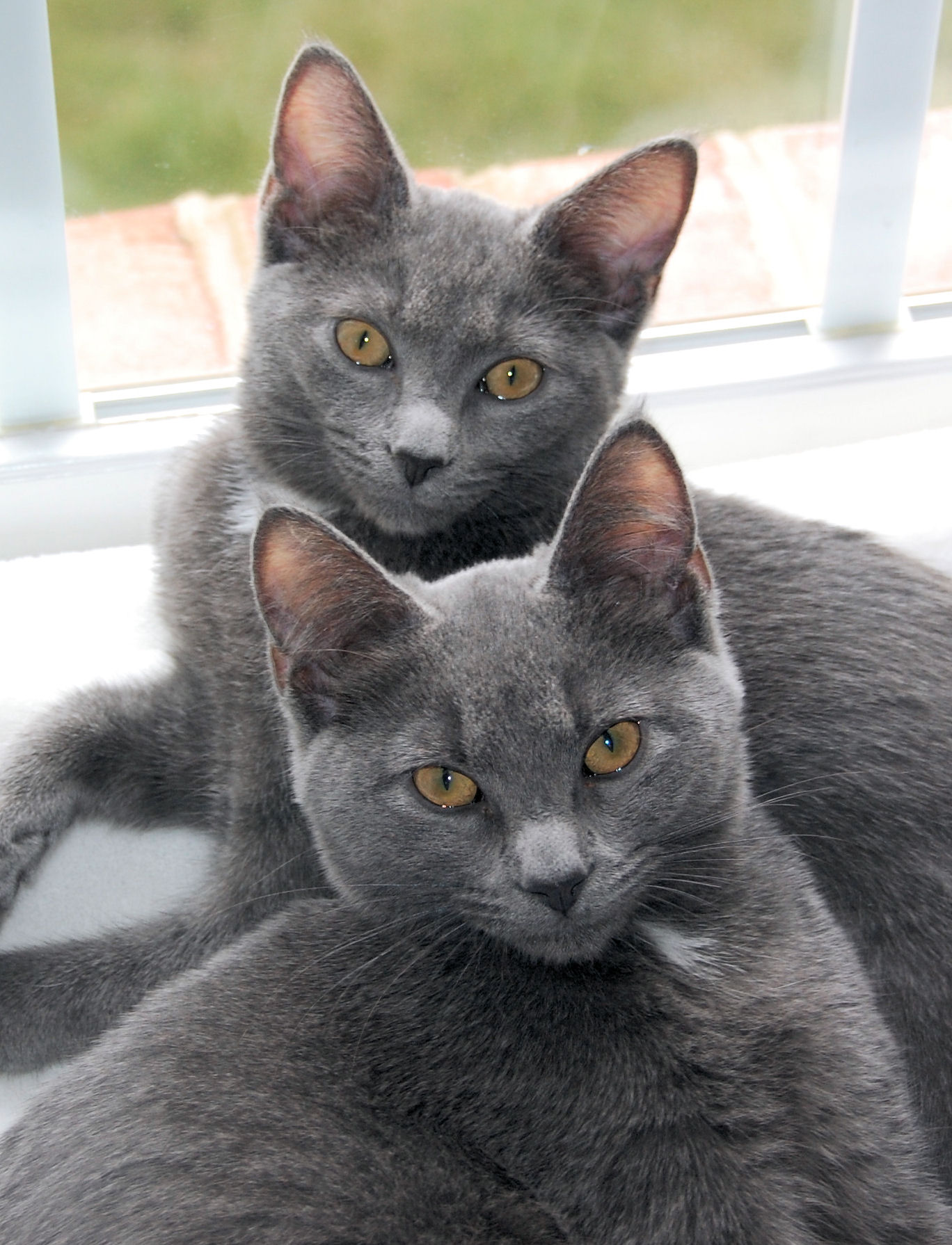 Gray Cats With White Stripes And Green Eyes