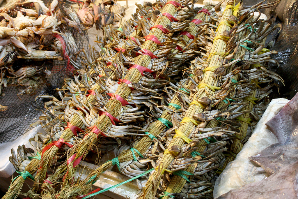 Daejeon South Korea  city pictures gallery : Korea Daejeon Live crab bundles at a market 01 Wikimedia ...