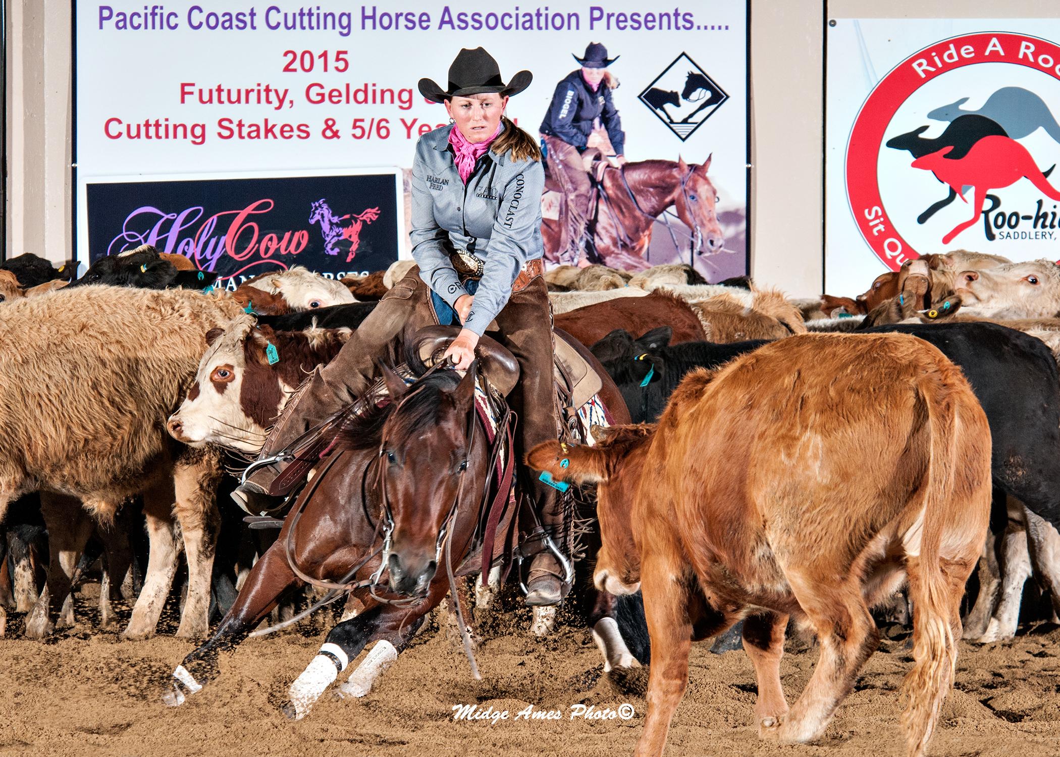 Western Horse Riding Cutting