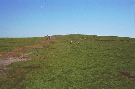 On Pendle Hill - geograph.org.uk - 30876