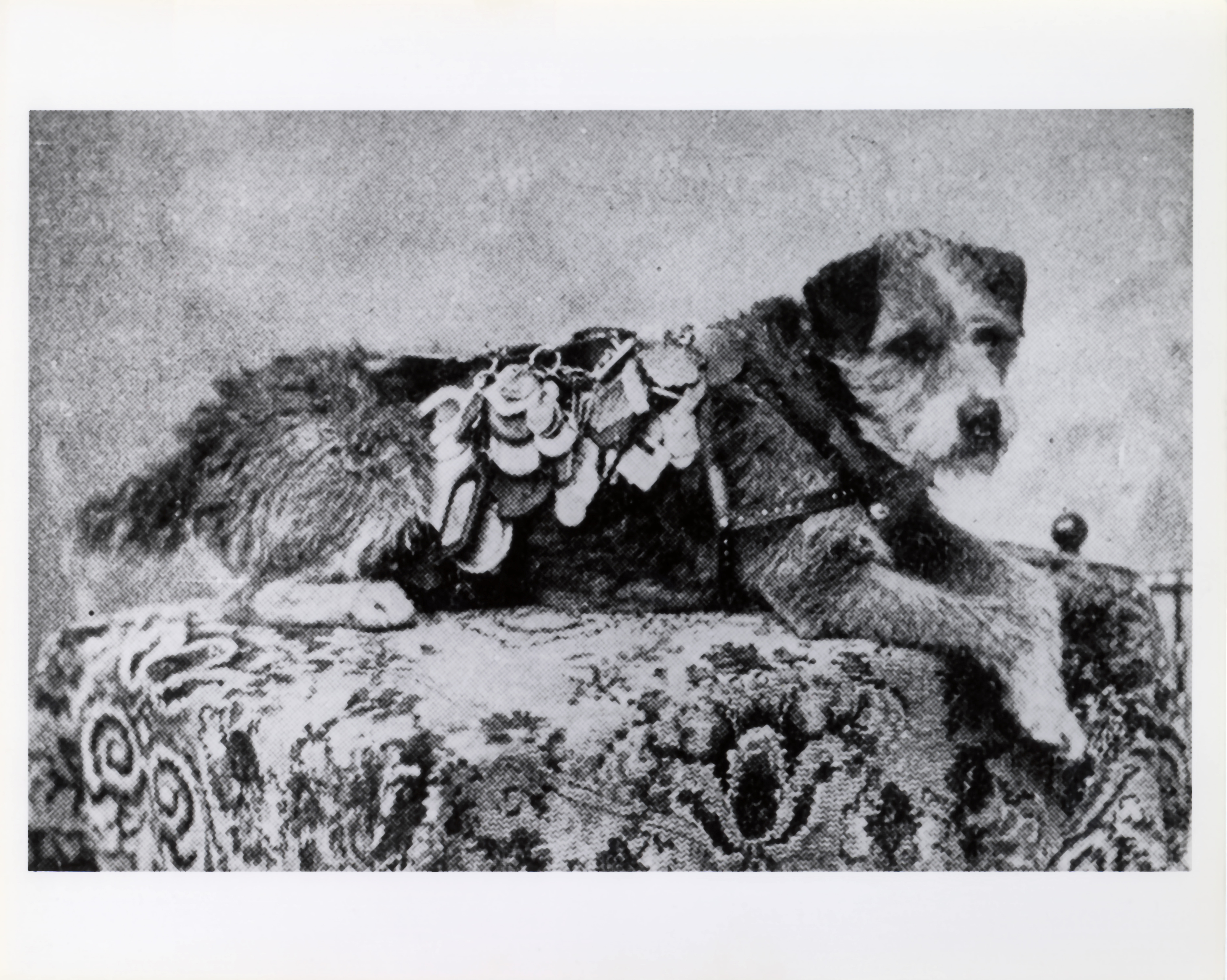 War Dog Collar