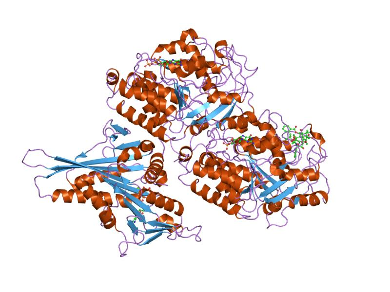 tubulin spindle proteins