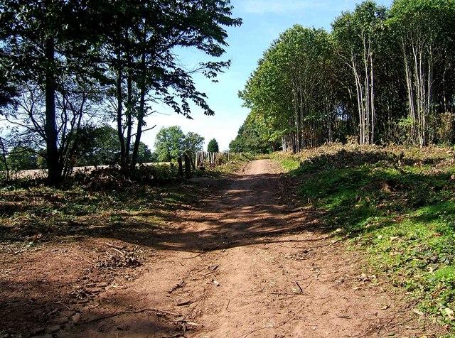 Path on the edge of Shrawley Wood - geograph.org.uk - 1484913
