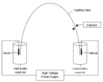 Capillary Electrophoresis Wikiversity