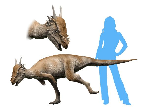 https://upload.wikimedia.org/wikipedia/commons/b/b0/Stygimoloch_NT_small.jpg