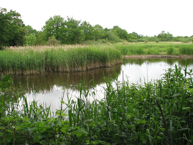 File:The Ted Ellis Nature Reserve - Old Mill Marsh - geograph.org.uk - 1341577.jpg