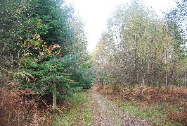 The Wealdway, Five Hundred Acre Wood - geograph.org.uk - 1584988