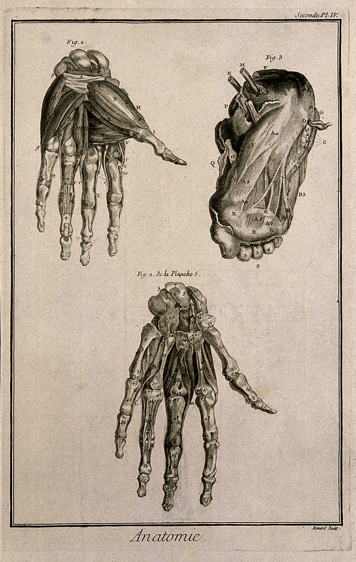 File:The muscles of the hand, after Albinus, and of the foot, aft ...