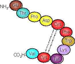 Urotensin-II