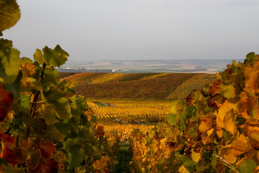Weinberge in der Champagne (© Kreatinst)
