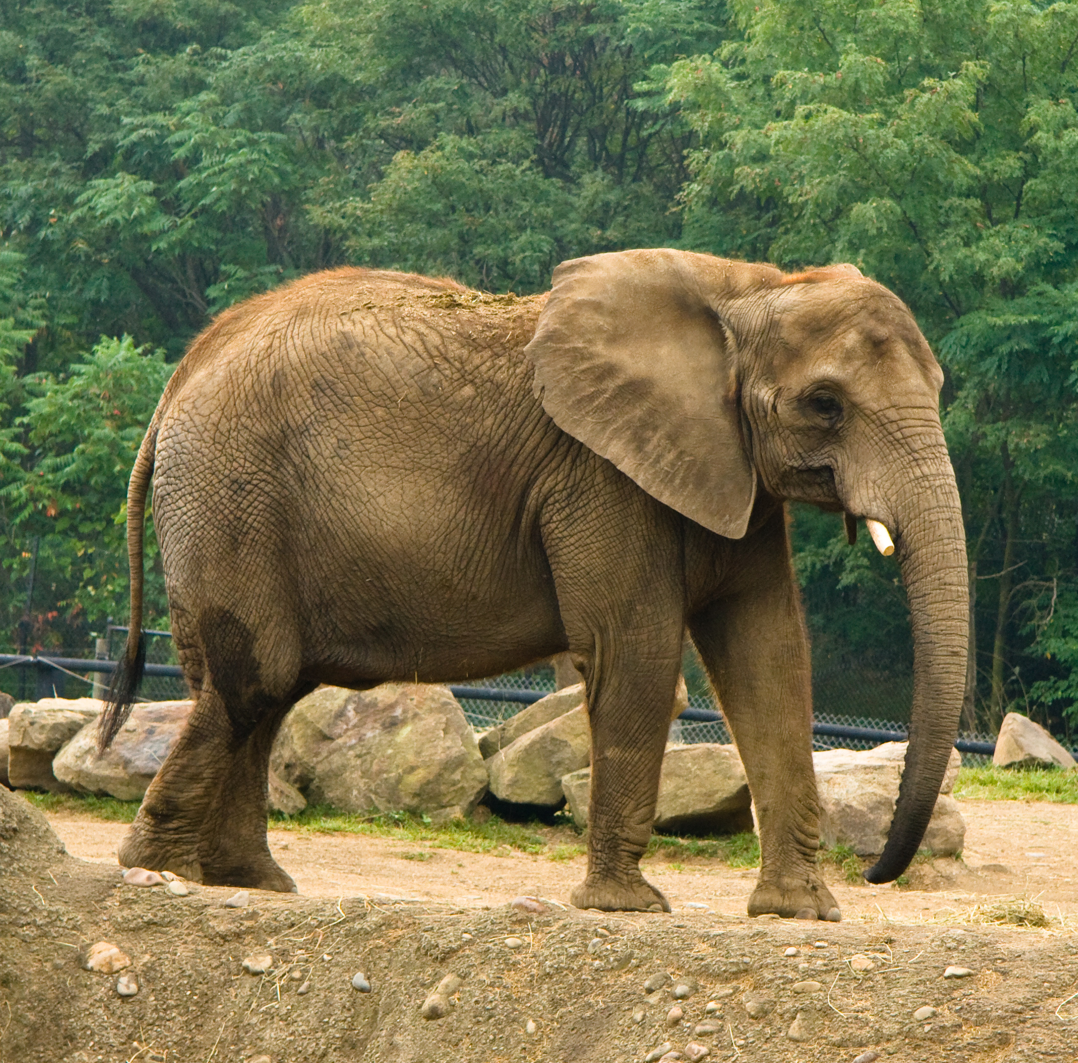 Image Result For Cute Baby Elephant
