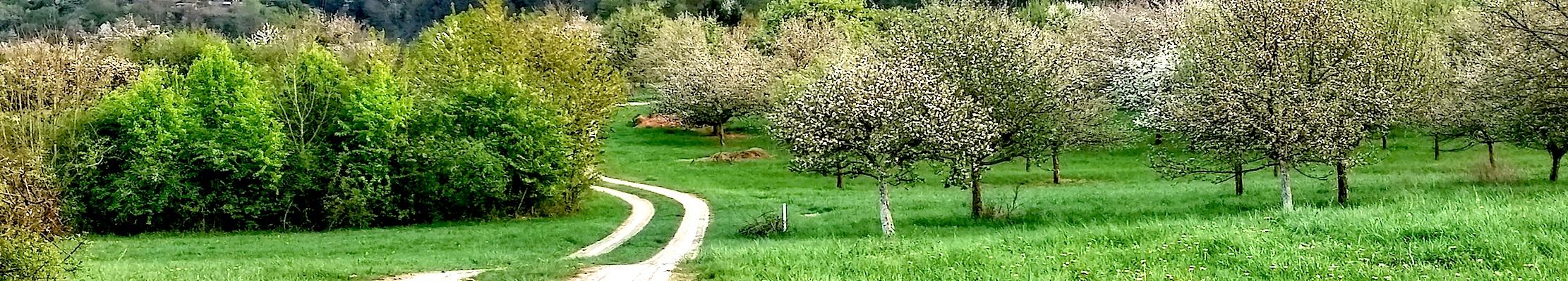 Сады Беккингена.