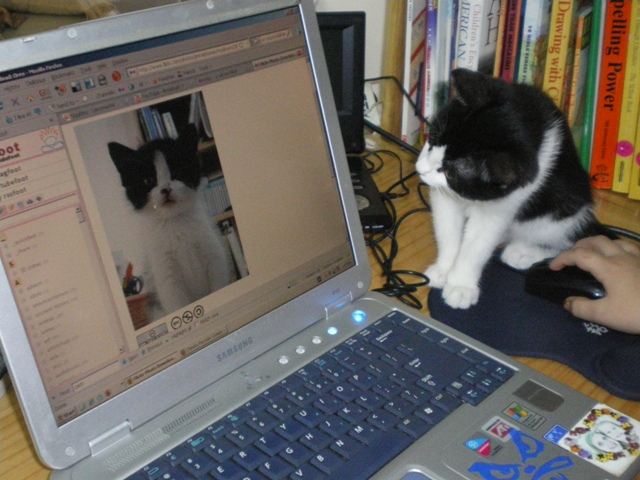 Cat stares at itself on computer monitor