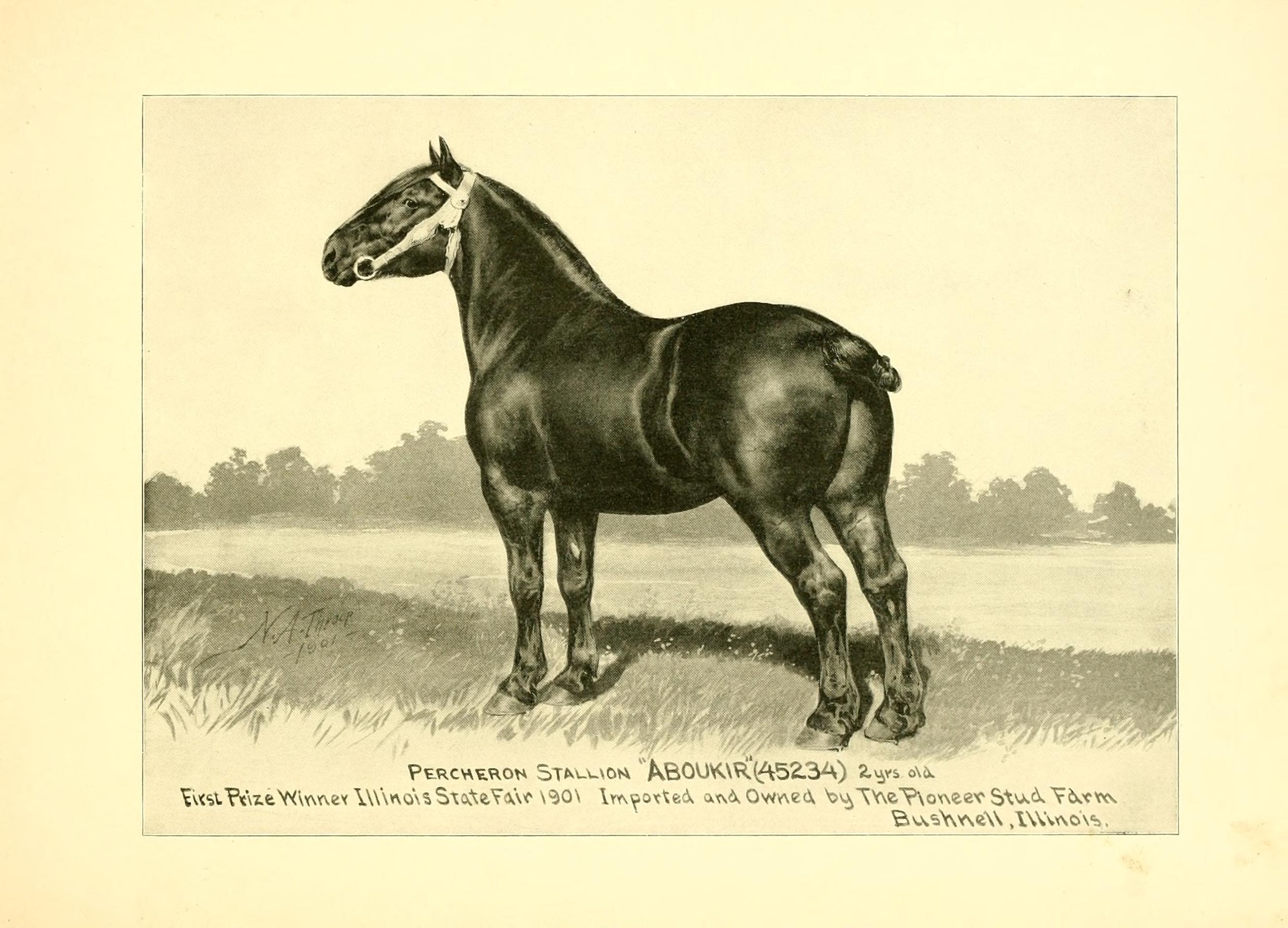 File:Catalogue of Truman's Pioneer Stud Farm - importers, exporters