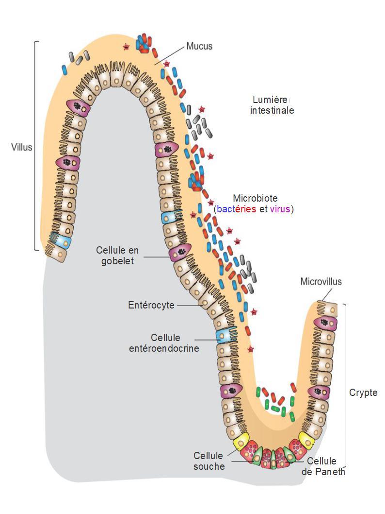 Sites de rencontre de cellules libres