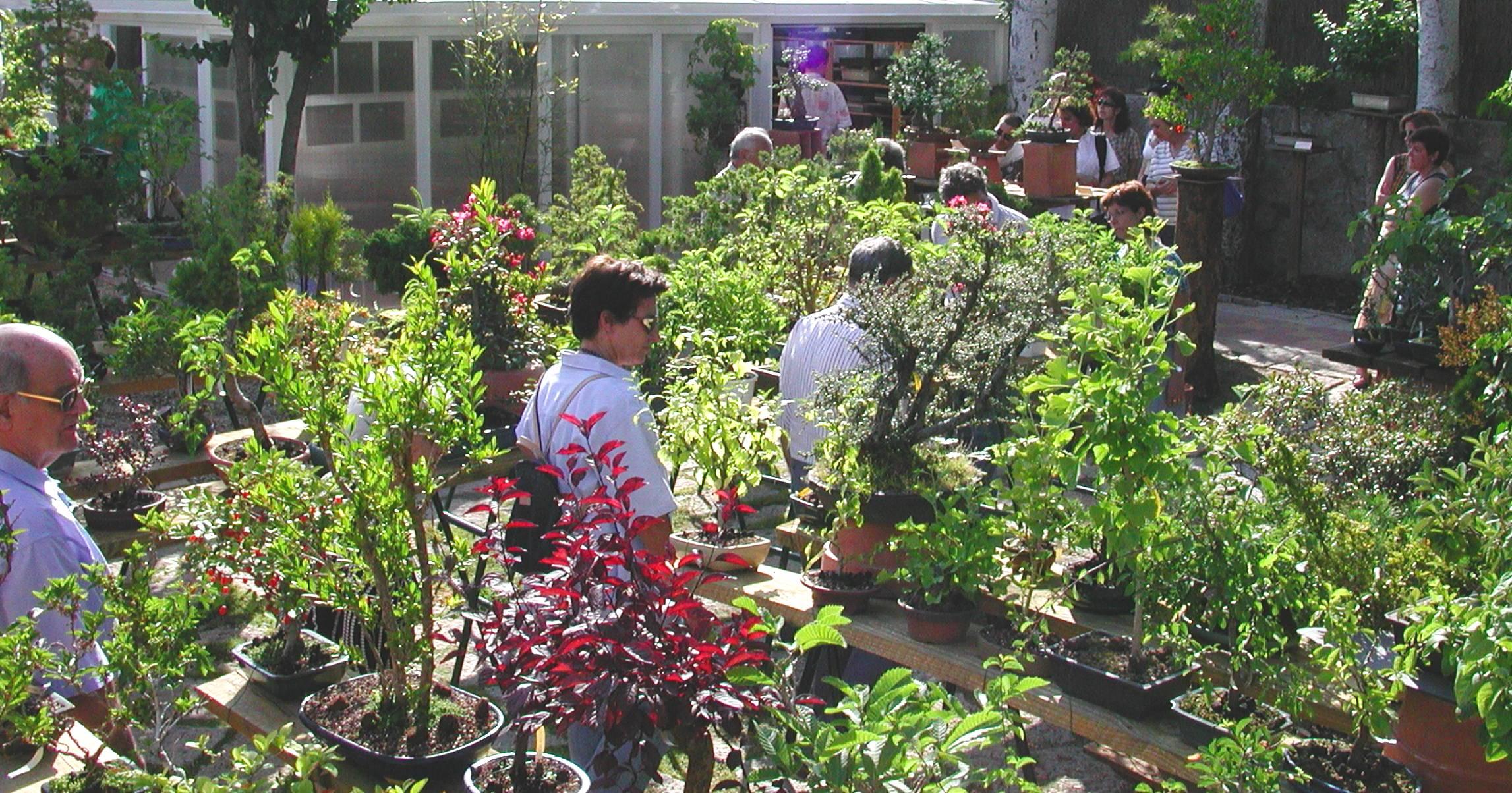 Colecciones p blicas de bonsai taringa for El jardin botanico