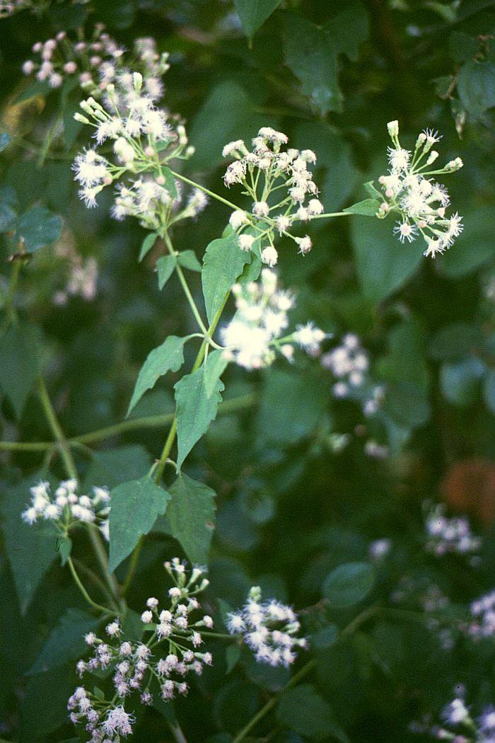 bekämpfung giftpflanzen grünland