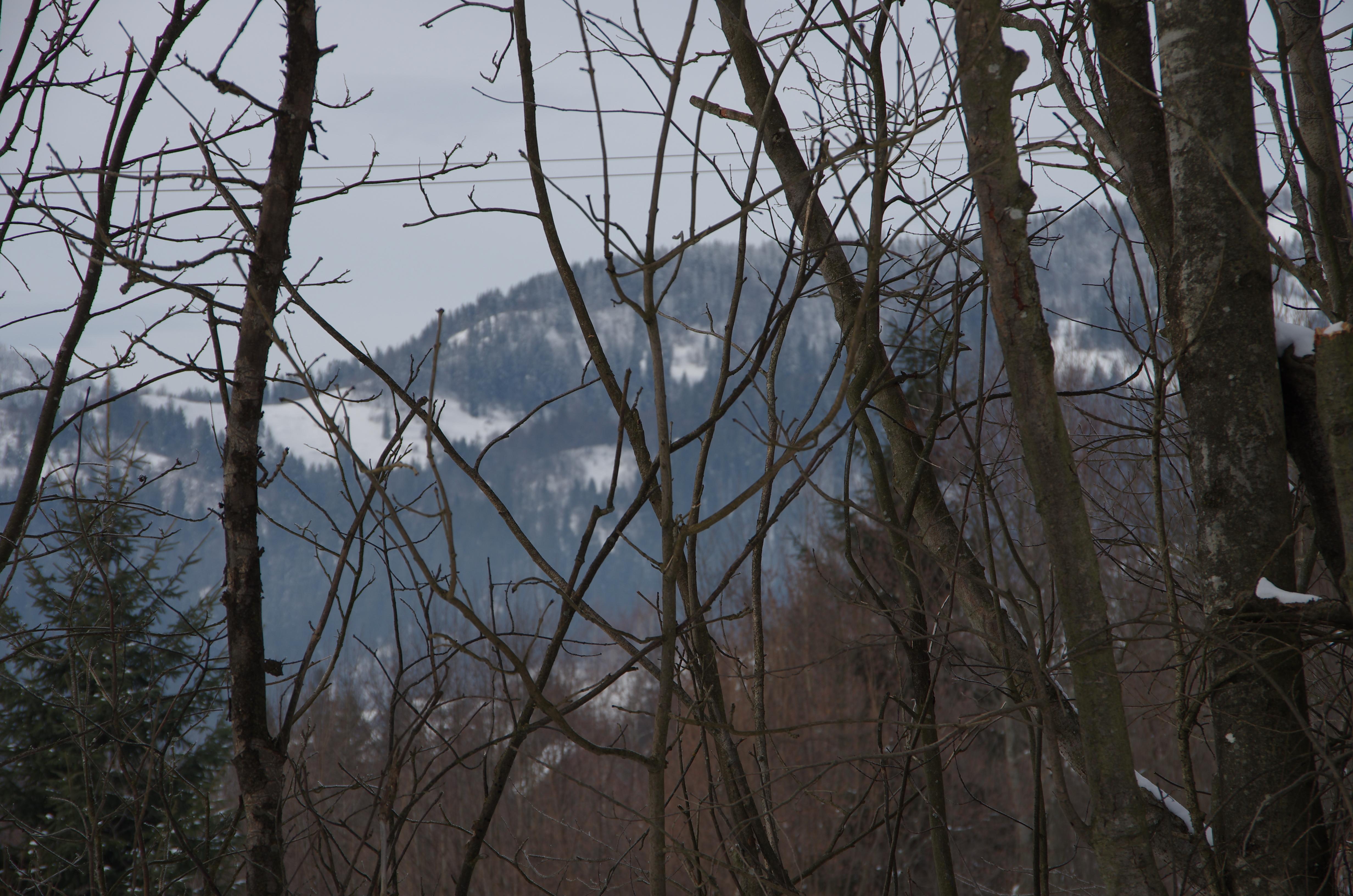 file dark winter forest jpg wikimedia commons