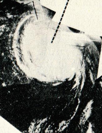 1961年飓风黛比 - 维基百科,自由的百科全书