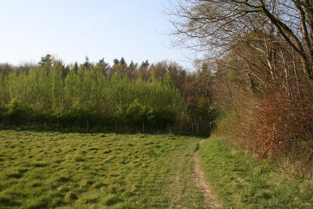 Edge of Down Wood - geograph.org.uk - 405183