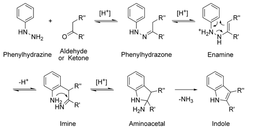 The mechanism of the Fischer indole synthesis