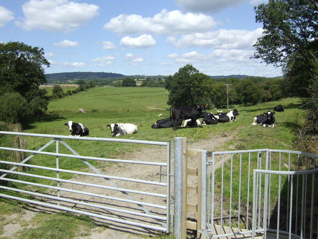 File:Footpath past the dairy cattle - geograph.org.uk - 520971.jpg