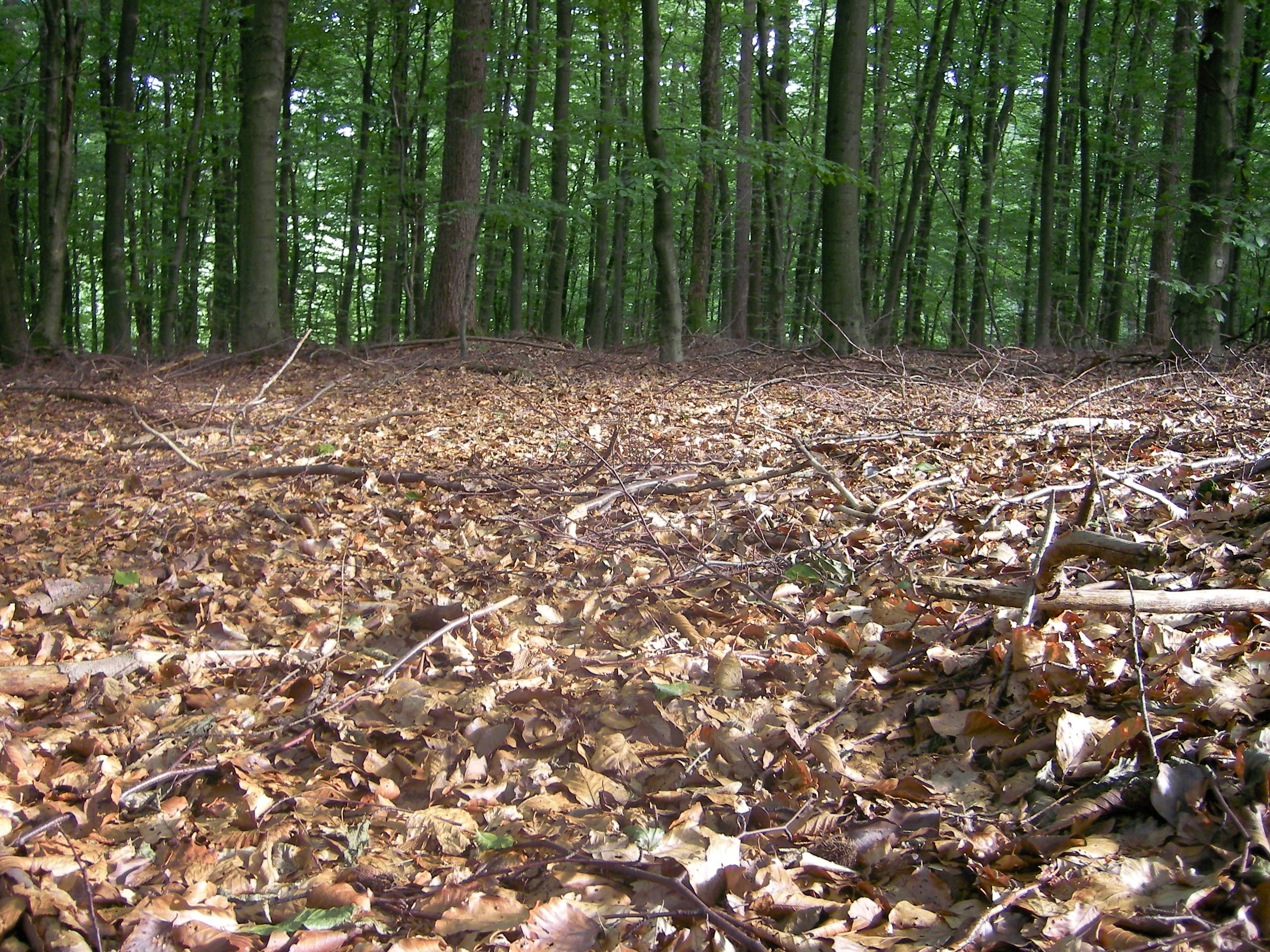 Forest floor - Wikipedia