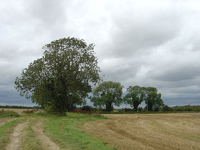 Four ash trees near Atterby