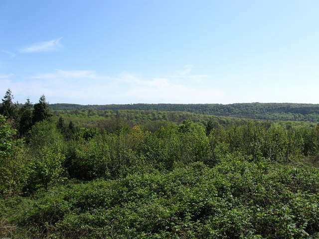 Friston Forest - geograph.org.uk - 1272316