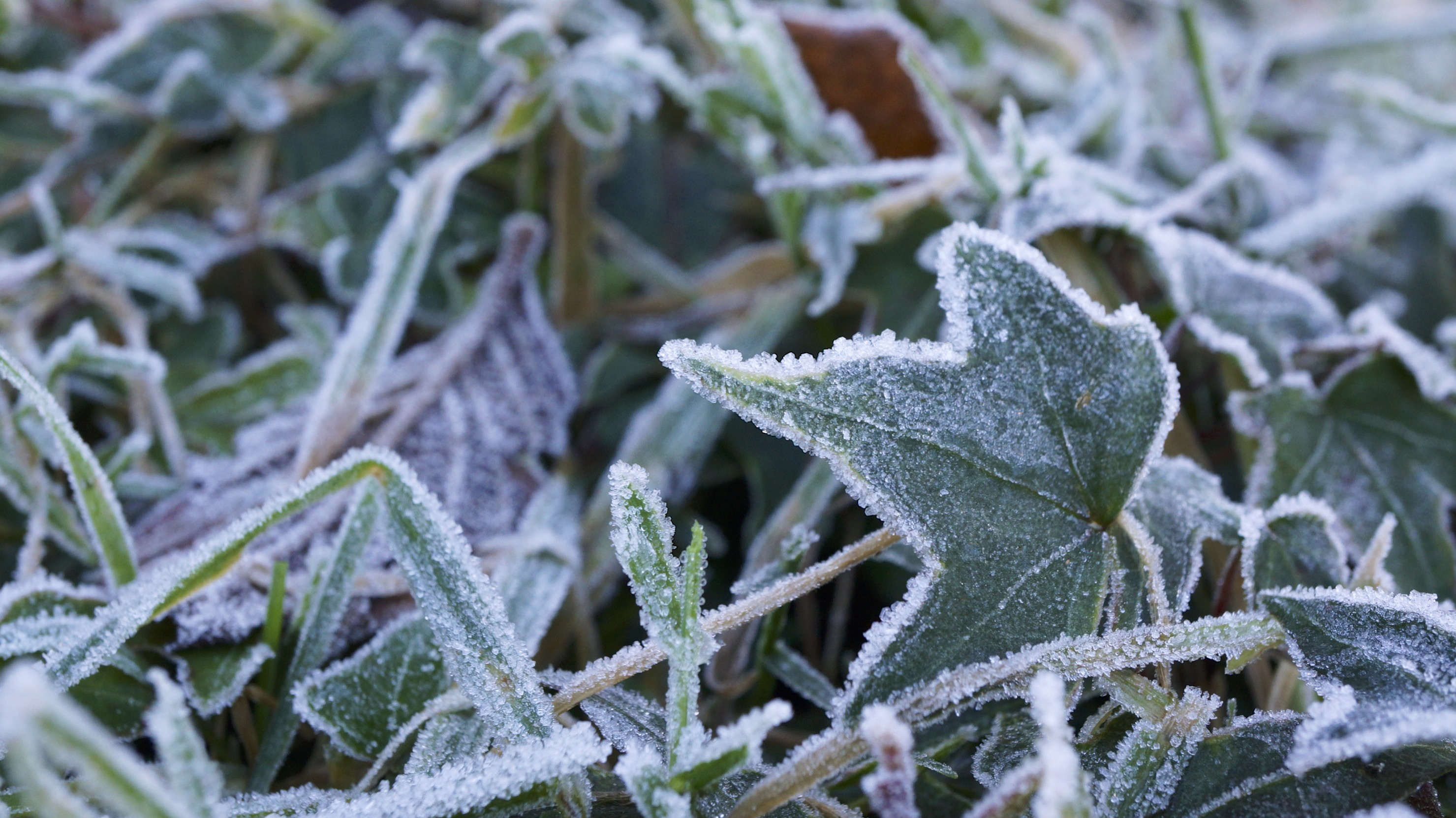 file frost in my garden 11621596336 jpg wikimedia commons. Black Bedroom Furniture Sets. Home Design Ideas