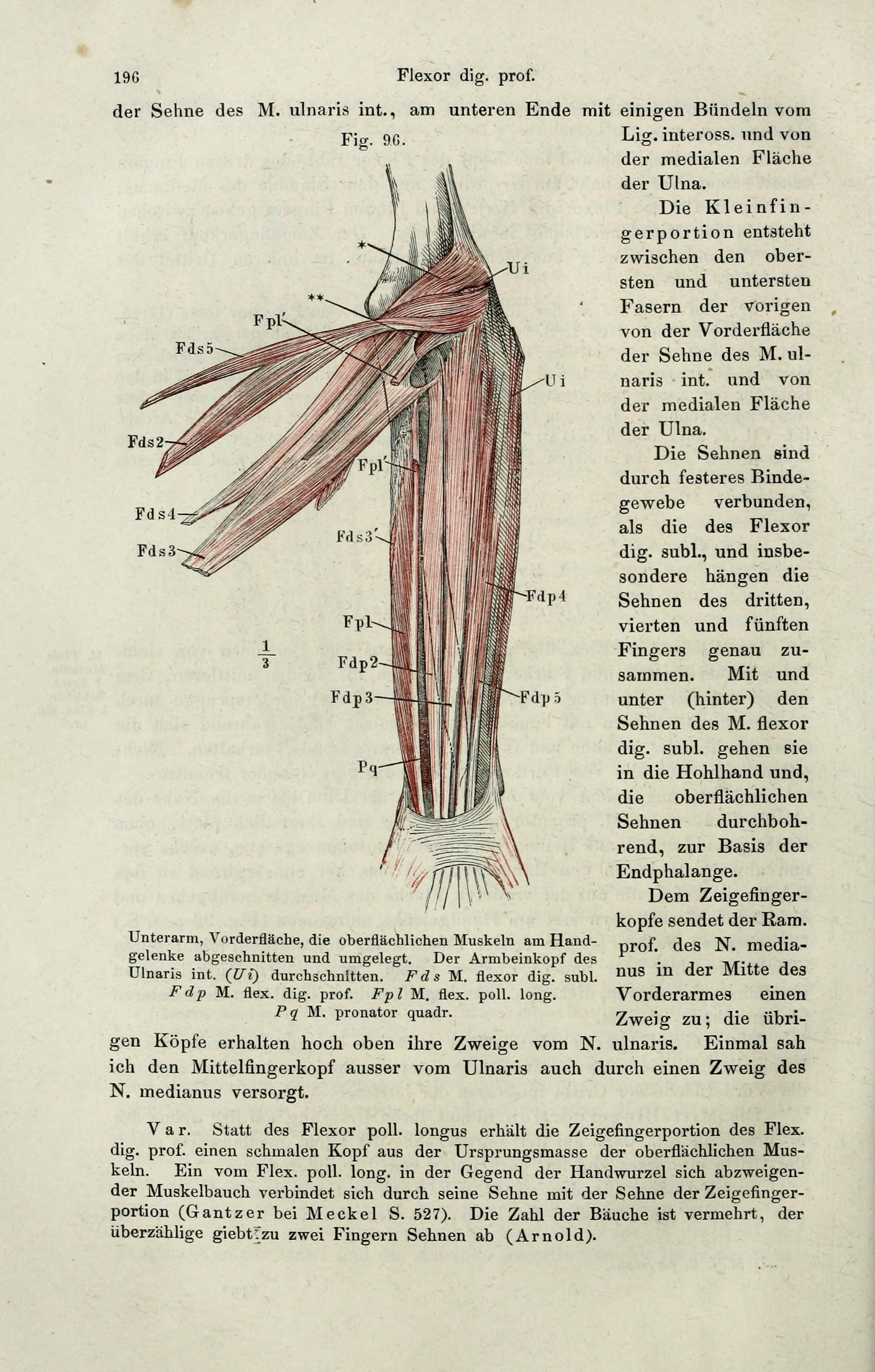 Fantastisch Verbinden Und Anatomie Und Physiologie Bilder ...
