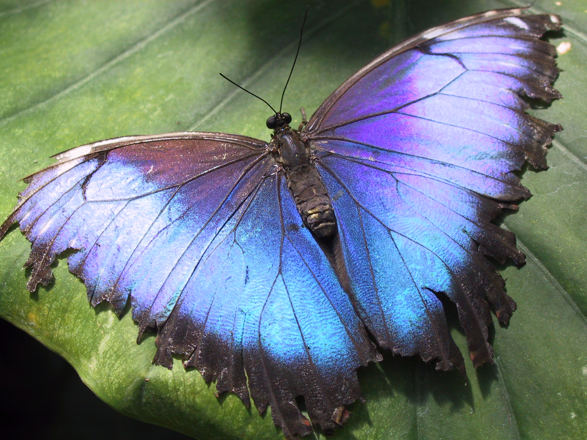 Butterfly - photo#4