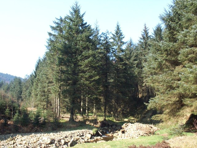 Lady Clough Woods - geograph.org.uk - 22694